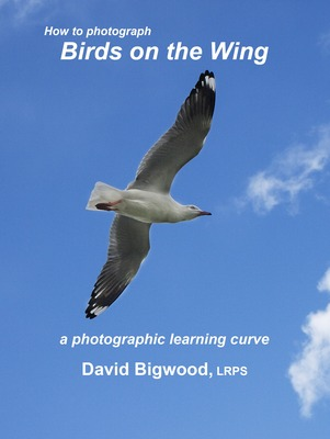 """Image of book cover with gull flying with blue sky in background. Text reads """"How to Photograph Birds on the Wing - a Photographic Learning Curve by David Bigwood, LRPS"""